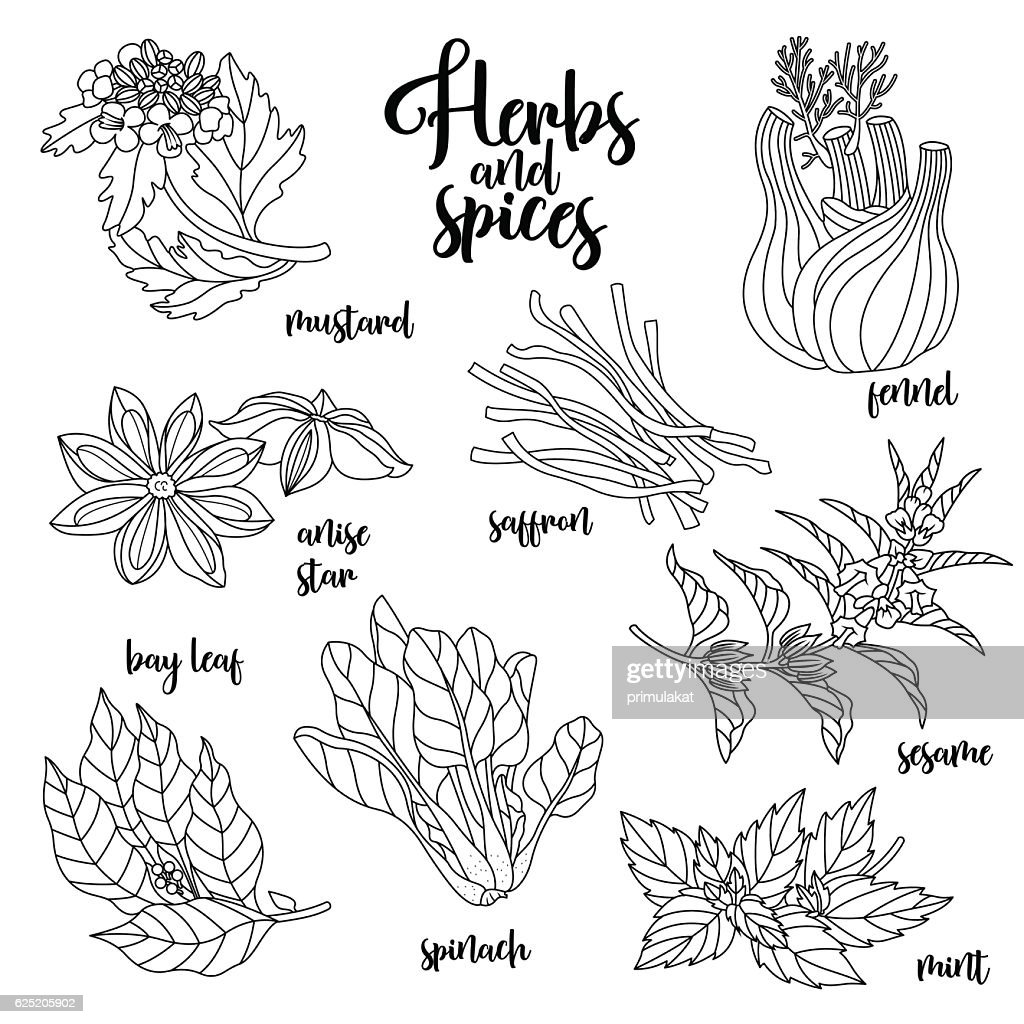 Spices and herbs vector set. Contour on white