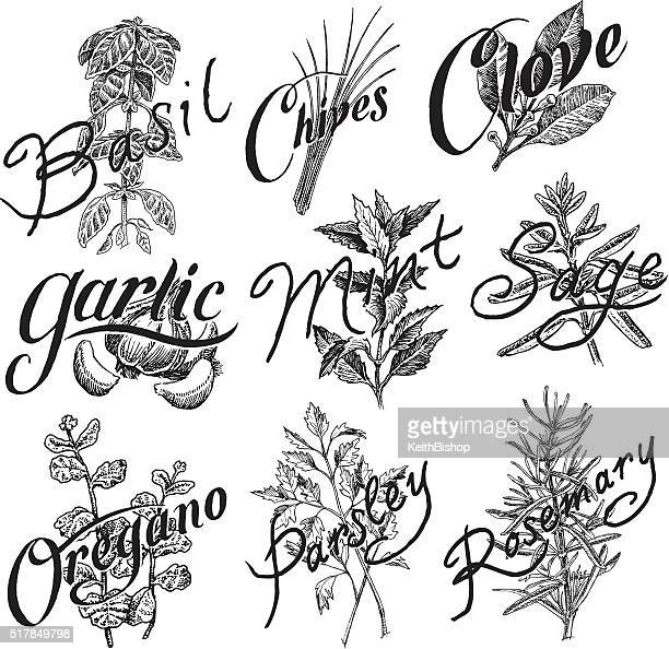 spices, basil, mint, clove, parsley, oregano, garlic, chives, rosemary - mint leaf culinary stock illustrations, clip art, cartoons, & icons