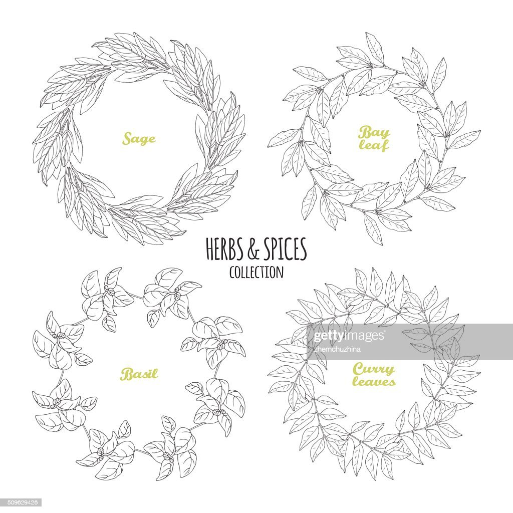 Spicy herb circle frames collection. Hand drawn sage, bay leaf