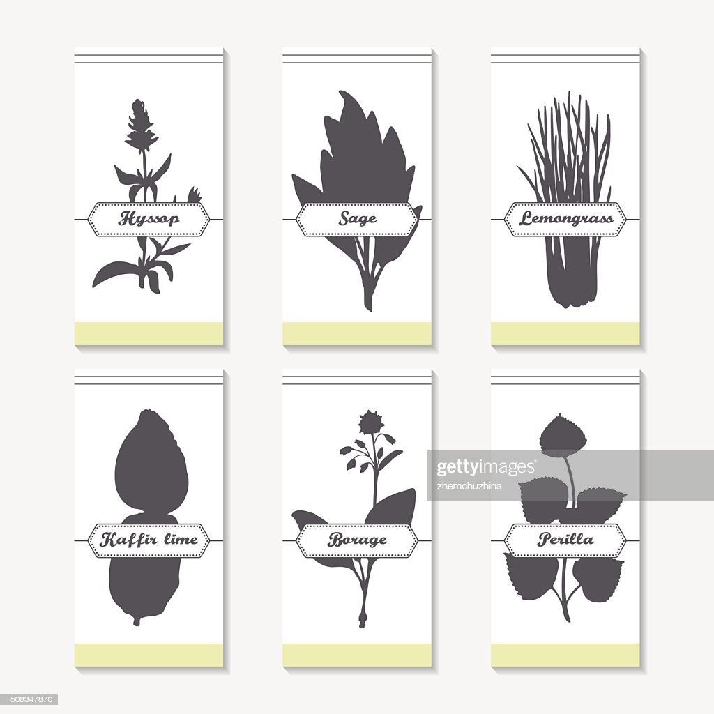 Spicy herbs silhouettes collection. Hand drawn hyssop, sage, lemongrass, kaffir