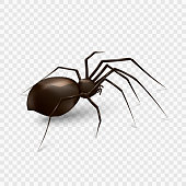 spider isolated on a transparent background