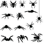 Spider silhouette collection