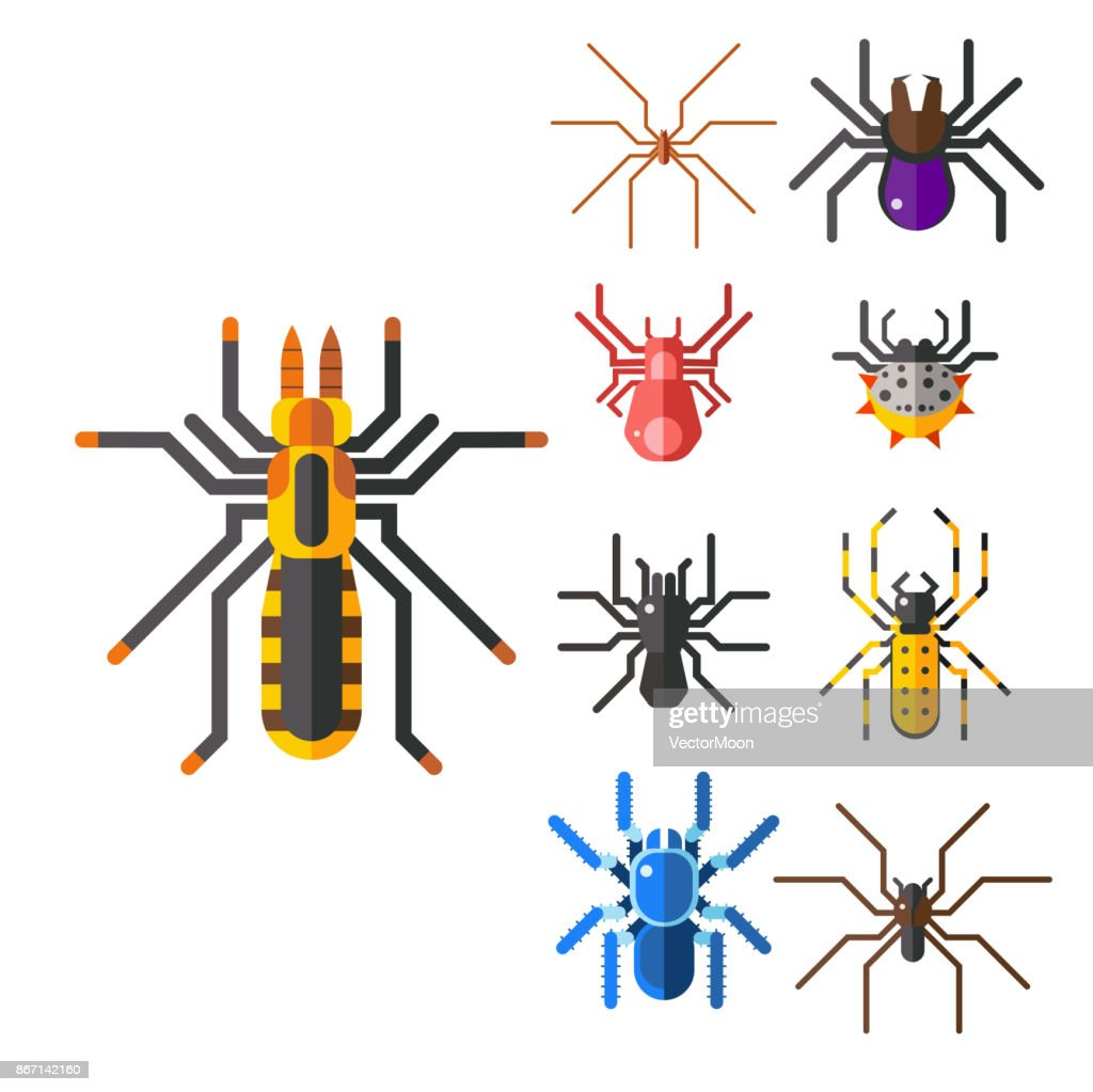 Spider web silhouette arachnid fear graphic flat scary animal design nature insect danger horror halloween vector icon