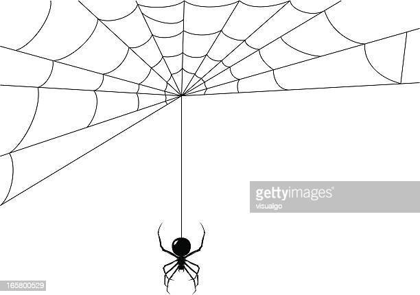 spider while it's making its web - spider stock illustrations