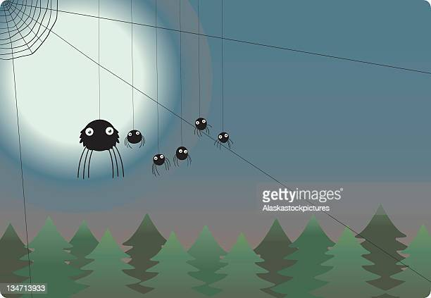 spidernight