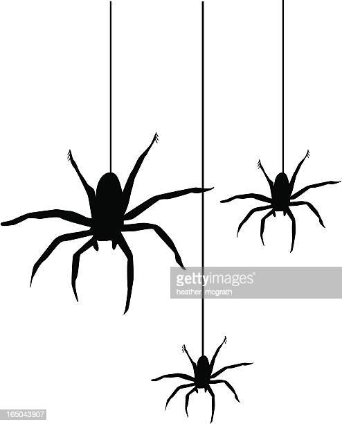 spiders - spider stock illustrations