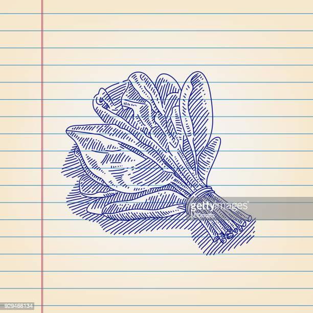 Dibujo de espinacas sobre papel alineado