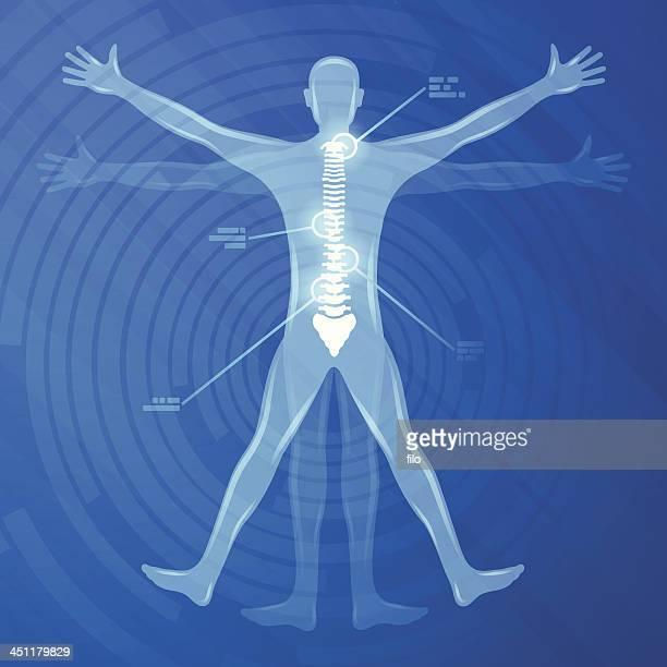 Illustrazione della colonna vertebrale