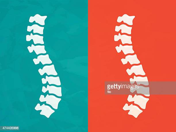spine - human bone stock illustrations