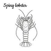 Spiny lobster.