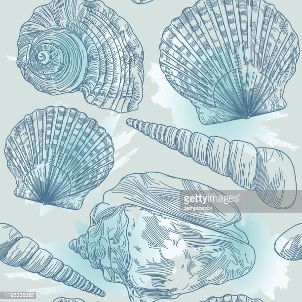 ilustrações de stock, clip art, desenhos animados e ícones de splashy seashell seamless pattern - concha do mar