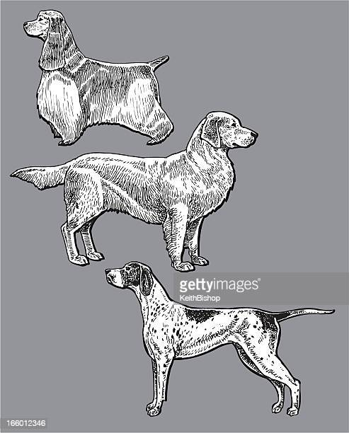 Sport Dogs - Pointer, Golden Retriever, Cocker Spaniel