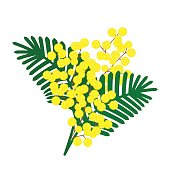 Sprig of Mimosa.