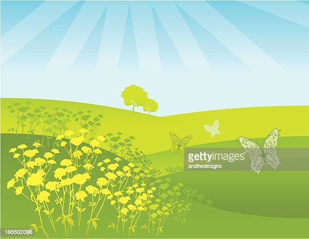 spring and summer field of flowers - rolling hills sun stock illustrations