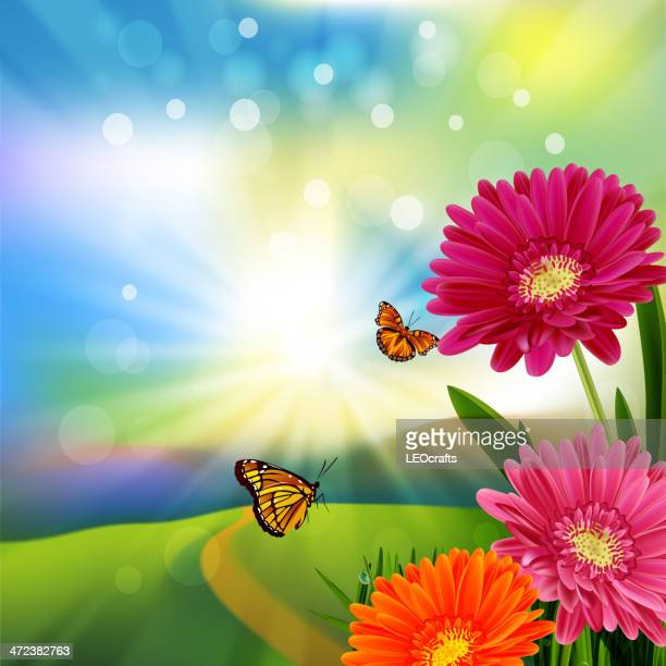 spring background - gerbera daisy stock illustrations, clip art, cartoons, & icons