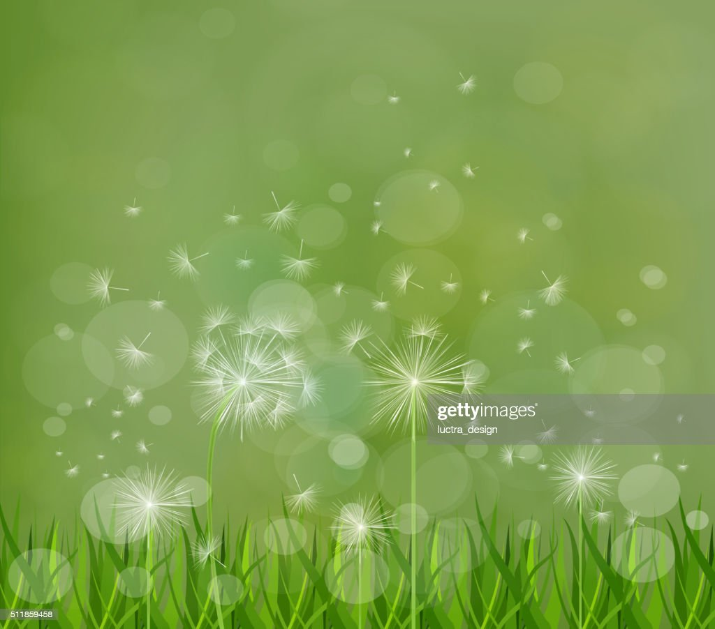 67cd74dc4b178 Spring Background With White Dandelions stock vector - Getty Images