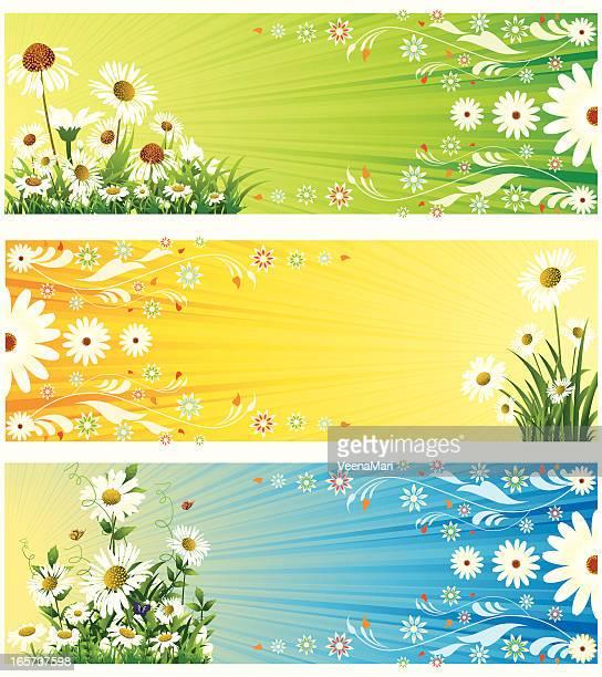 ilustraciones, imágenes clip art, dibujos animados e iconos de stock de banner de primavera - planta de manzanilla