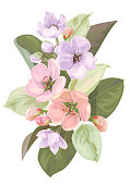 Spring blossom (bloom), branch with mauve, pink apple tree flowers. Bouquet light floret, buds, green leaves on white background. Digital draw illustration in watercolor style, vintage, vector