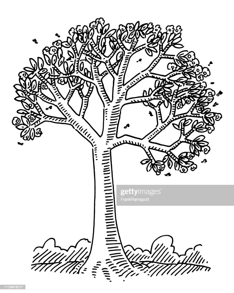 Spring Blossom Tree Nature Drawing : stock illustration