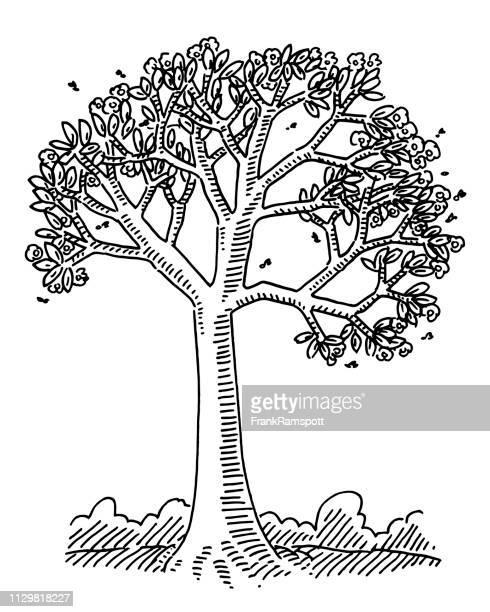 Spring Blossom Baum Natur Zeichnung