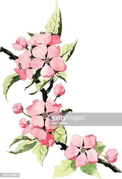 Frühlingsblüte (Spring blossom)