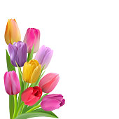 Spring card with colorful tulips