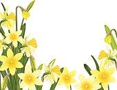 Spring Daffodils Garden