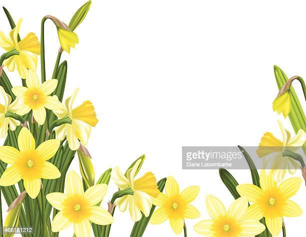 spring daffodils garden - daffodil stock illustrations, clip art, cartoons, & icons