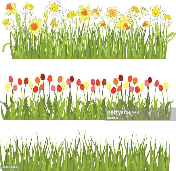 spring fields - paperwhite narcissus stock illustrations, clip art, cartoons, & icons