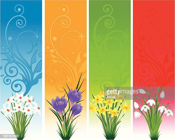 spring floral banner - paperwhite narcissus stock illustrations, clip art, cartoons, & icons