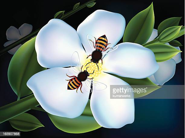 spring flower and bee - bumblebee stock illustrations, clip art, cartoons, & icons