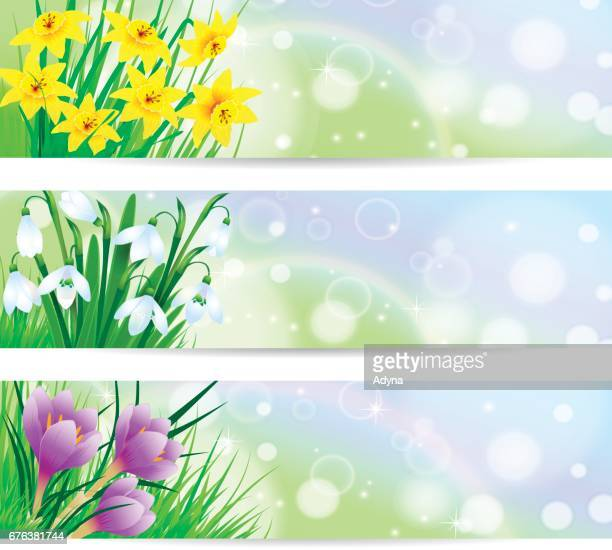 spring flower banner - narcissus mythological character stock illustrations, clip art, cartoons, & icons