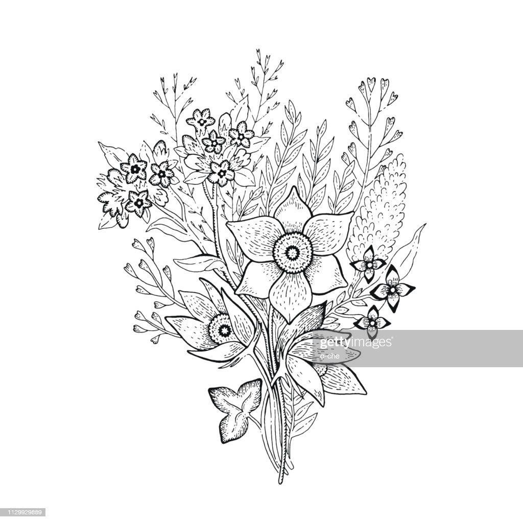 Spring flower bouquet, sketch floral illustration. Hand drawn vector silhouette graphic for coloring book, t-shirt print, wedding invitation, mother s day card. Cute realistic springtime or summer art