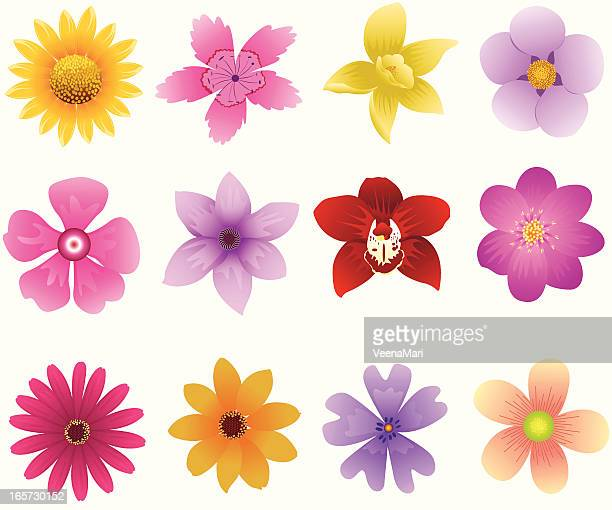 spring flower icon - gerbera daisy stock illustrations, clip art, cartoons, & icons