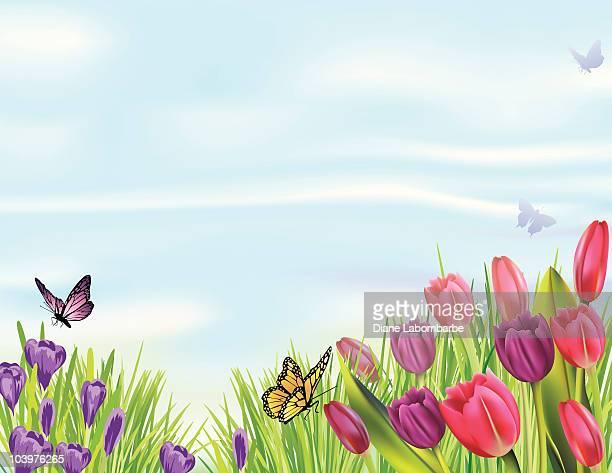 春 Crocuses のチューリップと 1 回)、