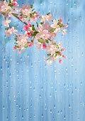 Spring Flowers Rain Vector