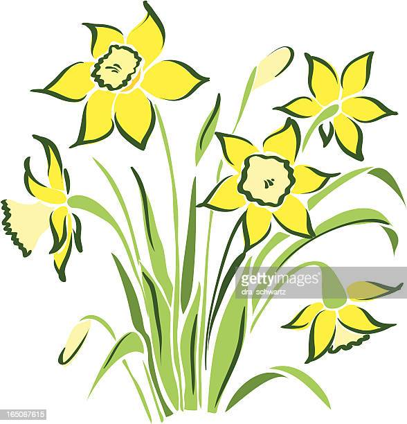 spring flowers - daffodil stock illustrations, clip art, cartoons, & icons