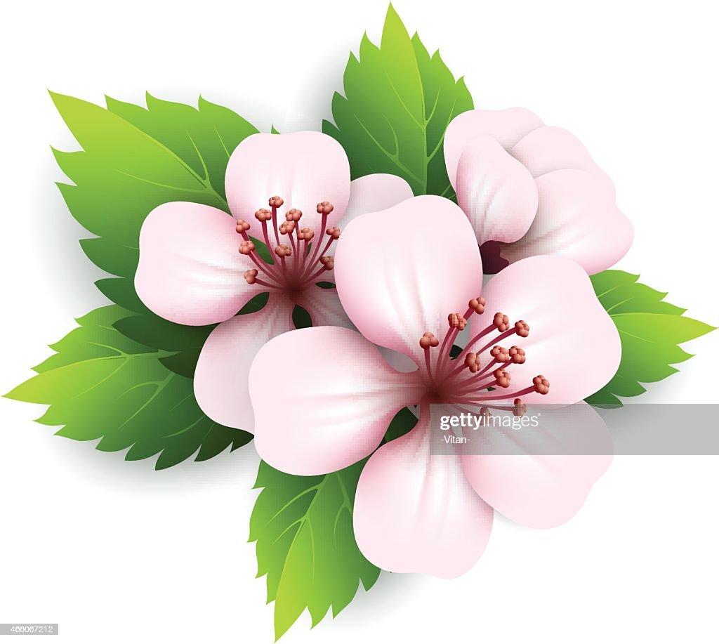 Spring flowers vector illustration vector art getty images spring flowers vector illustration vector art mightylinksfo