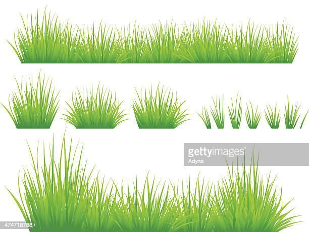 spring grass - blade of grass stock illustrations