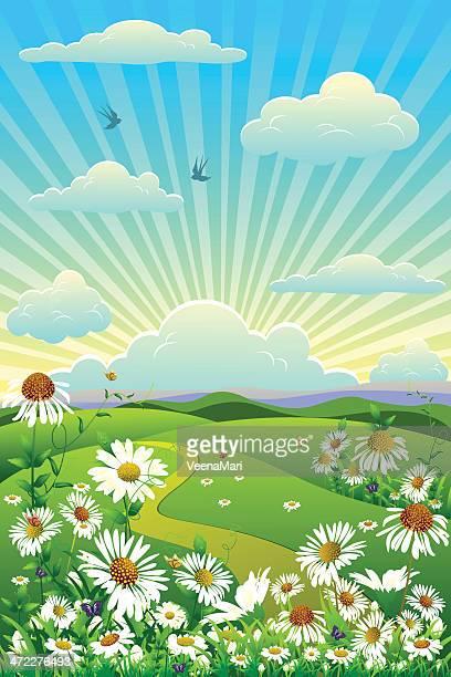 ilustraciones, imágenes clip art, dibujos animados e iconos de stock de paisaje de primavera. - planta de manzanilla