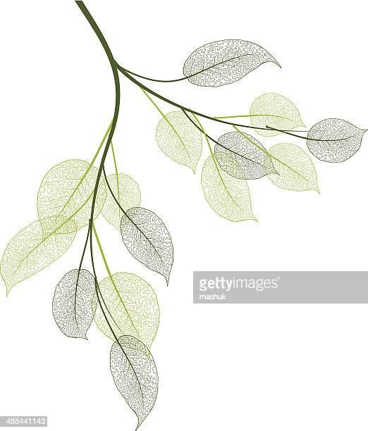 stockillustraties, clipart, cartoons en iconen met spring leaves - tak plantdeel