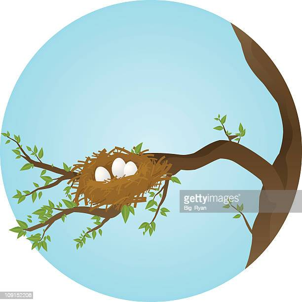 animal nest stock illustrations and cartoons getty images