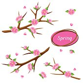 Spring set with branches of tree and sakura flowers. Seasonal illustration
