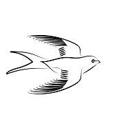 Spring Swallow Bird