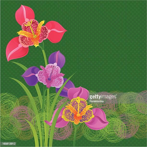 spring tigridias invitation - easter lily stock illustrations