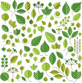 Spring tree leaves, botany and eco flat images. Vector illustration
