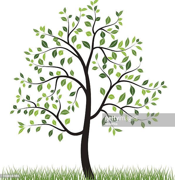 World's Best Birch Tree Stock Illustrations - Getty Images