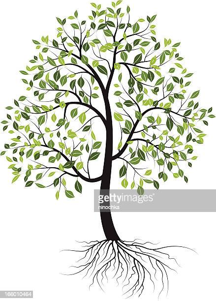 spring tree - tree trunk stock illustrations, clip art, cartoons, & icons