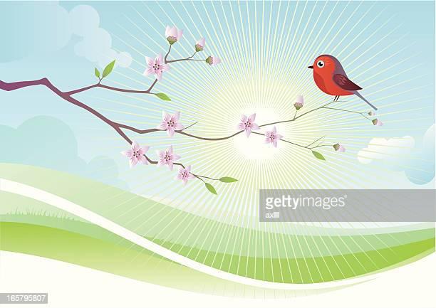 spring - mockingbird stock illustrations, clip art, cartoons, & icons