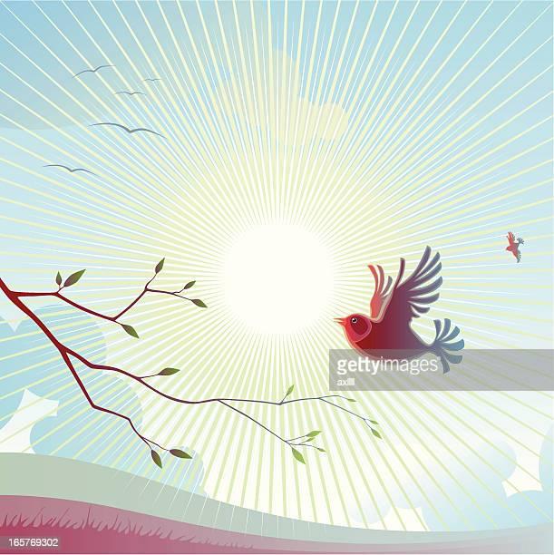 spring_sunrise - mockingbird stock illustrations, clip art, cartoons, & icons